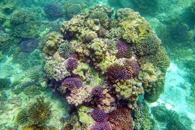 Oman, Schnorcheln, Daymaniyat, Islands, Geheimtipp, Korallen