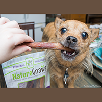 Nature Gnaws Jumbo Bully Sticks Review