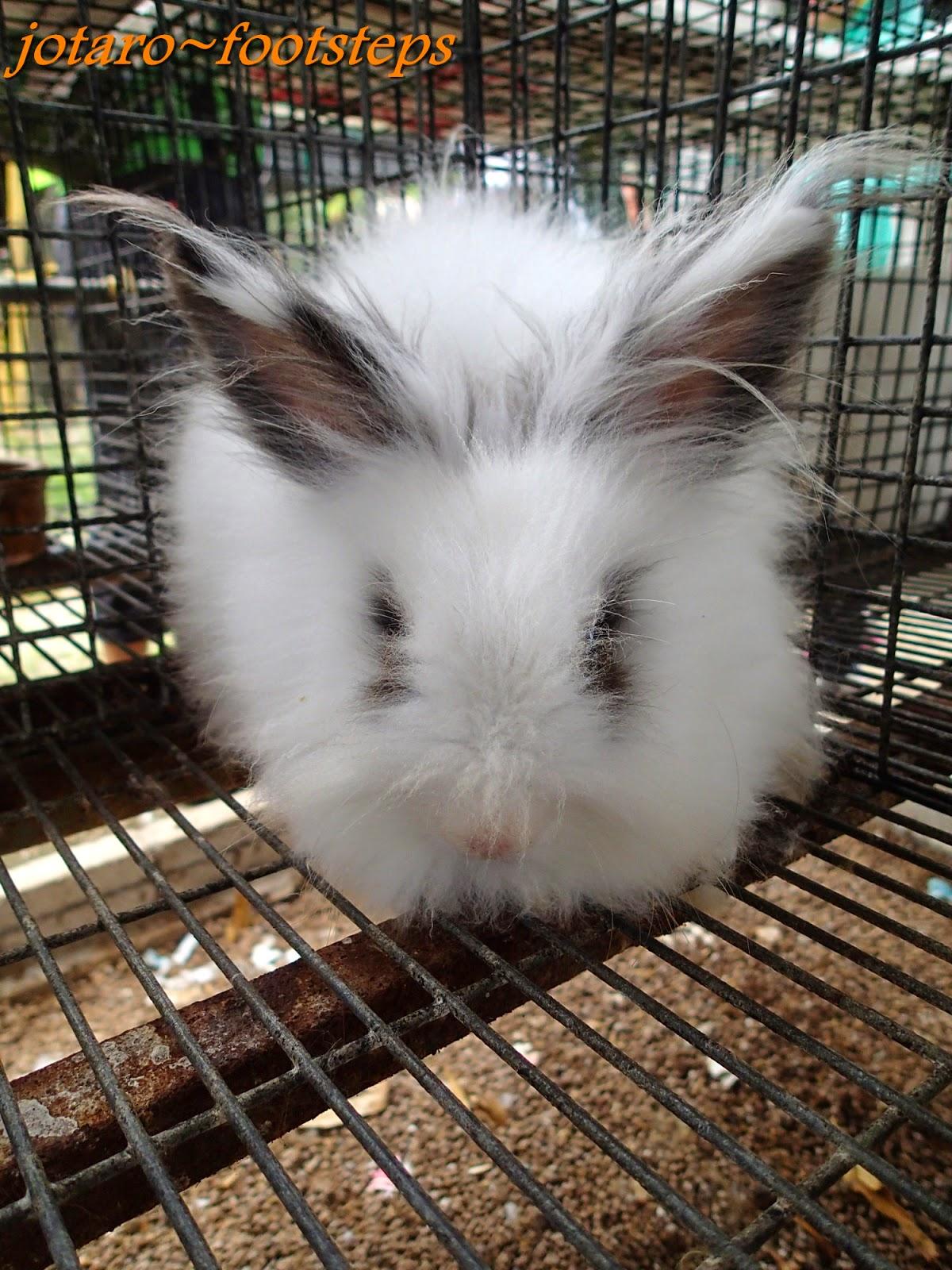 Footsteps Jotaro S Travels Malaysia 2014 Rabbit Farm