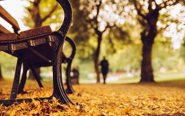 Bankje in het park omringt door herfstbladeren