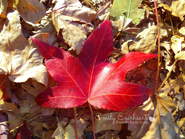 Sunlight on a dark red leaf.