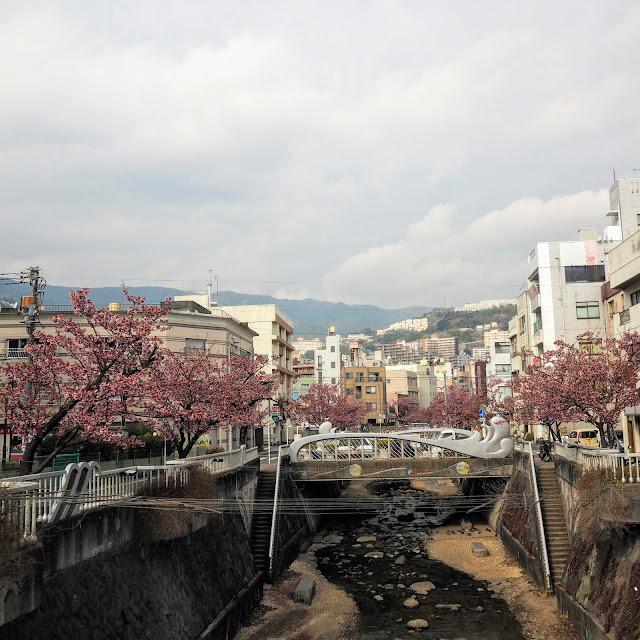 熱海 糸川 あたみ桜