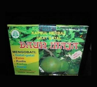 jual daun maja kapsul original obat gatal exim surabaya