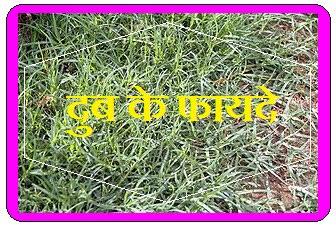 conch grass