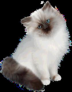 gatosmcachorros,cats,pet,mascotas,png,fondo transparente,carteles