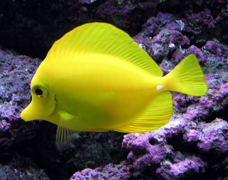Tropical Fish Wild Life Animal