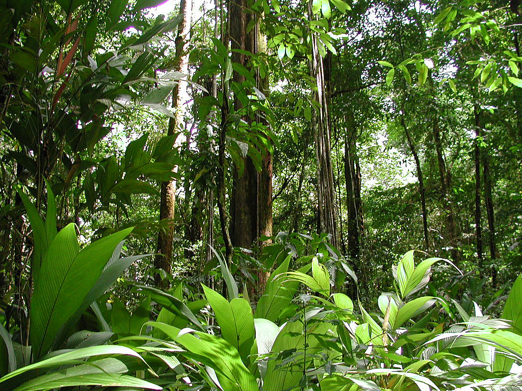 amazon rainforest - photo #17