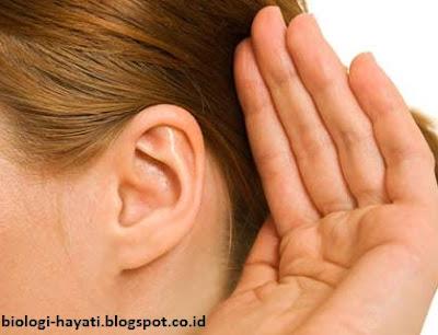 Kelainan-Kelainan yang Biasa Terjadi pada Sistem Pendengaran ( Telinga )