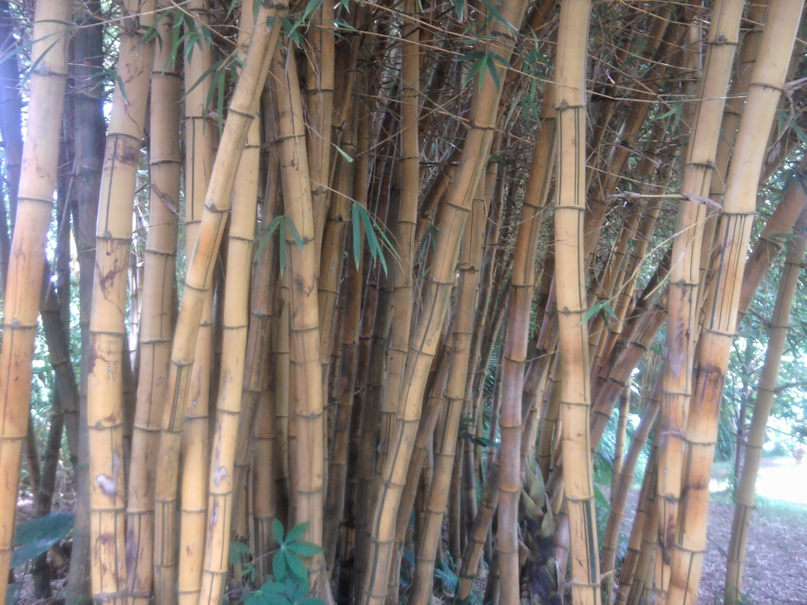 Bamboo Twin Falls Maui