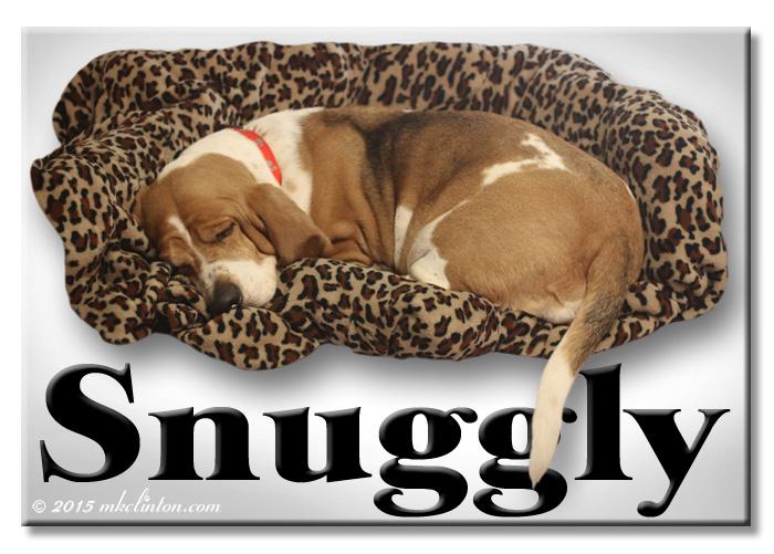 Basset in a snuggly Snuggle