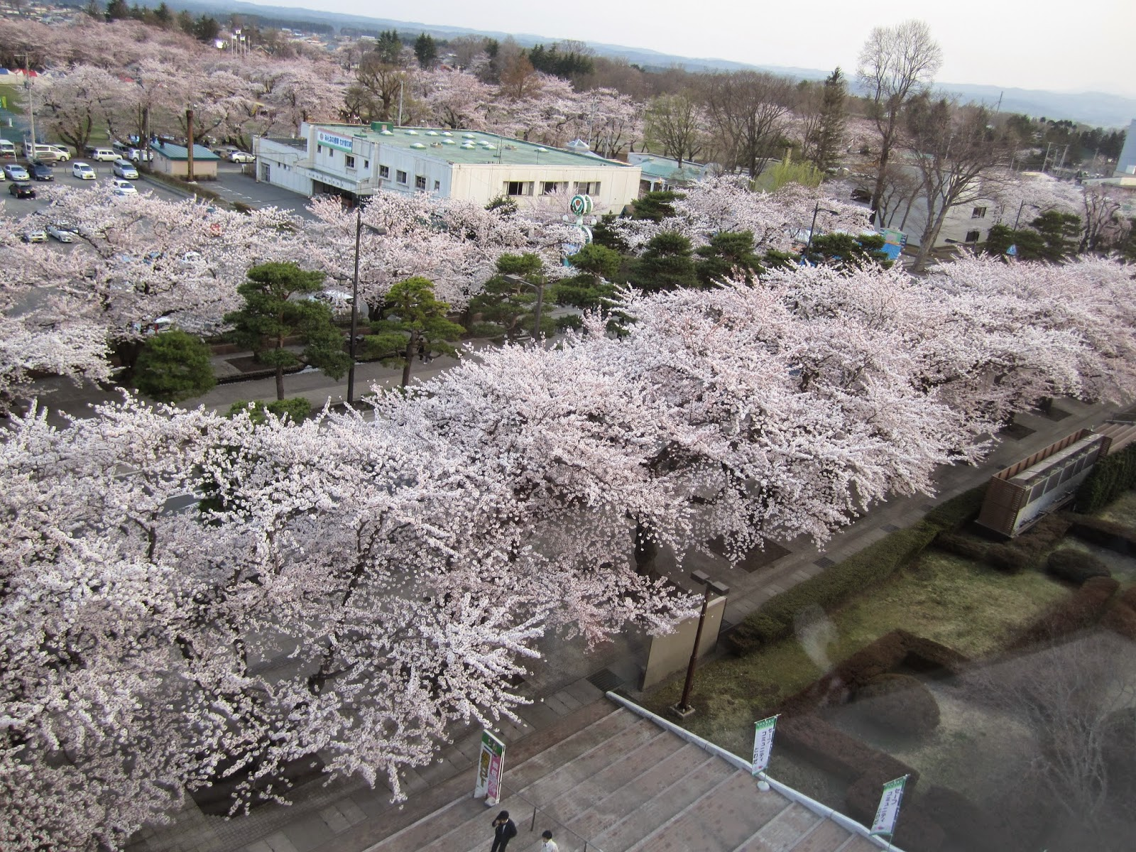 Sakura Cherry Blossom Viewing Area Towada Spring Festival 桜展望台 十和田市 春まつり