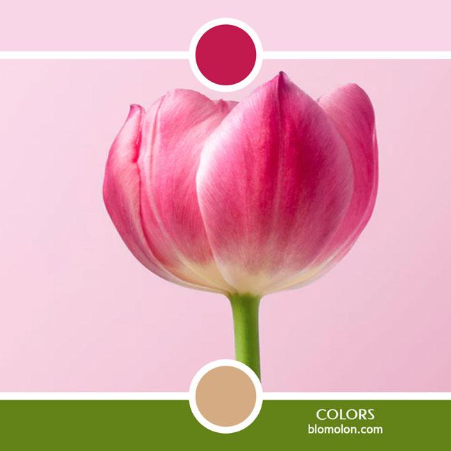 variedad_en_color_color_56