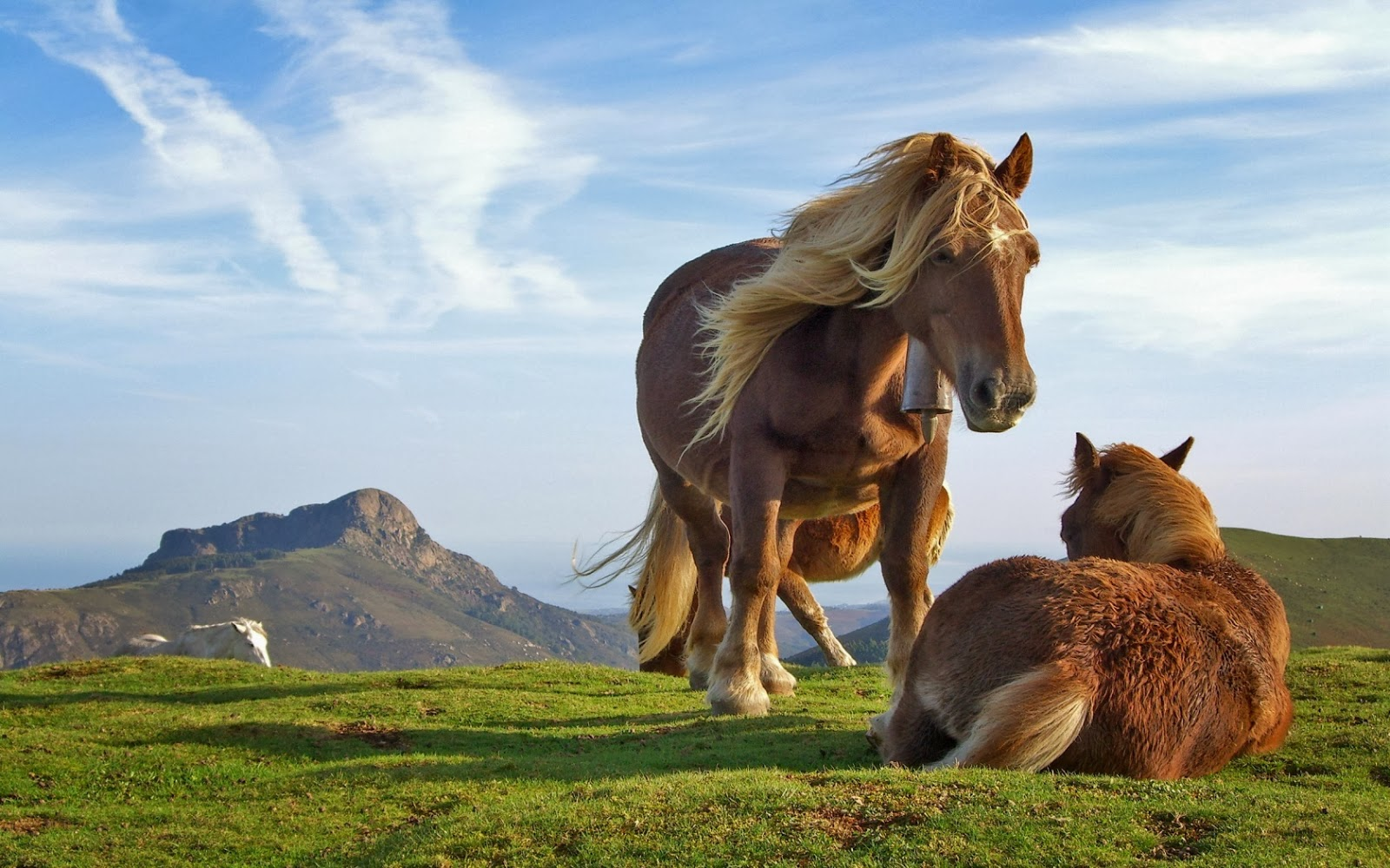 Horse hd wallpapers animals library hill horse thecheapjerseys Image collections