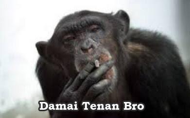 monyet gokil sedang merokok
