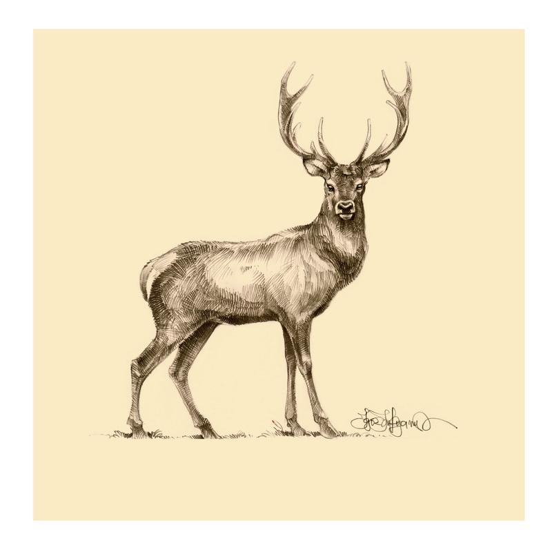 deer drawings - photo #8