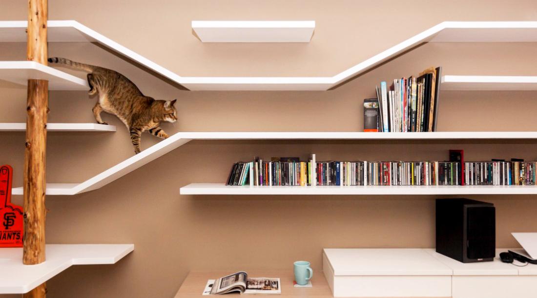 Cara Merawat Kucing Anggora Dan Tips Menilah Jenis Kucing Anggora Galur Murni rumah kecilcantik danmansi