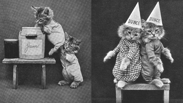 stare-fotografie-koty