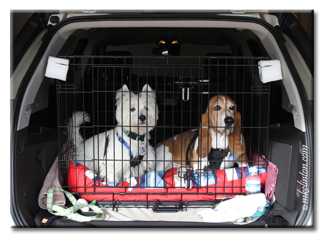 Pierre Westie and Bentley Basset Hound are ready to ride in their car kennel