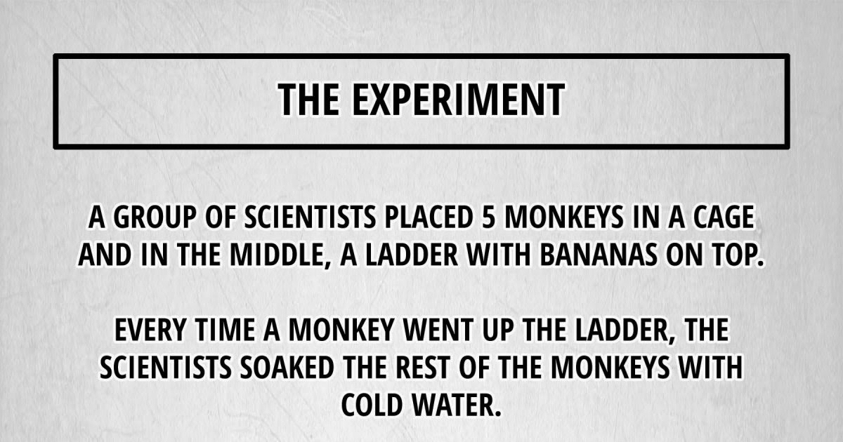 The Experiment - A group of scientists placed 5 monkeys in a cage and in the middle, a ladder with bananas on top. Every time a monkey went up the ladder, the scientists soaked the rest of the monkeys with cold water.