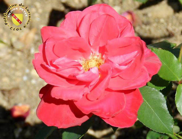 VILLERS-LES-NANCY (54) - La roseraie du Jardin botanique du Montet - Rose Perpetuel red