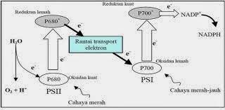 aliran elektron non siklik