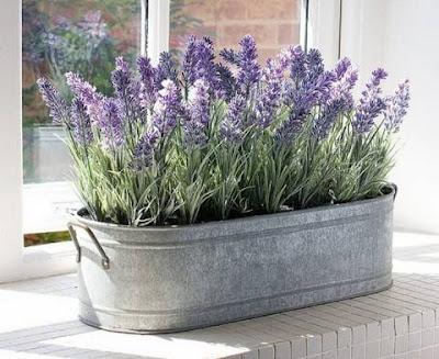 Decoraconmar a plantas de interior y otras for Todas las plantas ornamentales