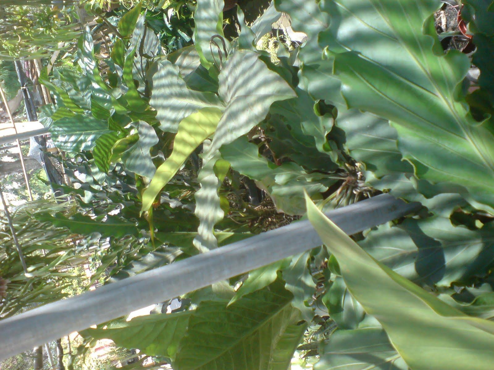 warna.alamlandscapegarden@yahoo.com: jenis - jenis tanaman ...