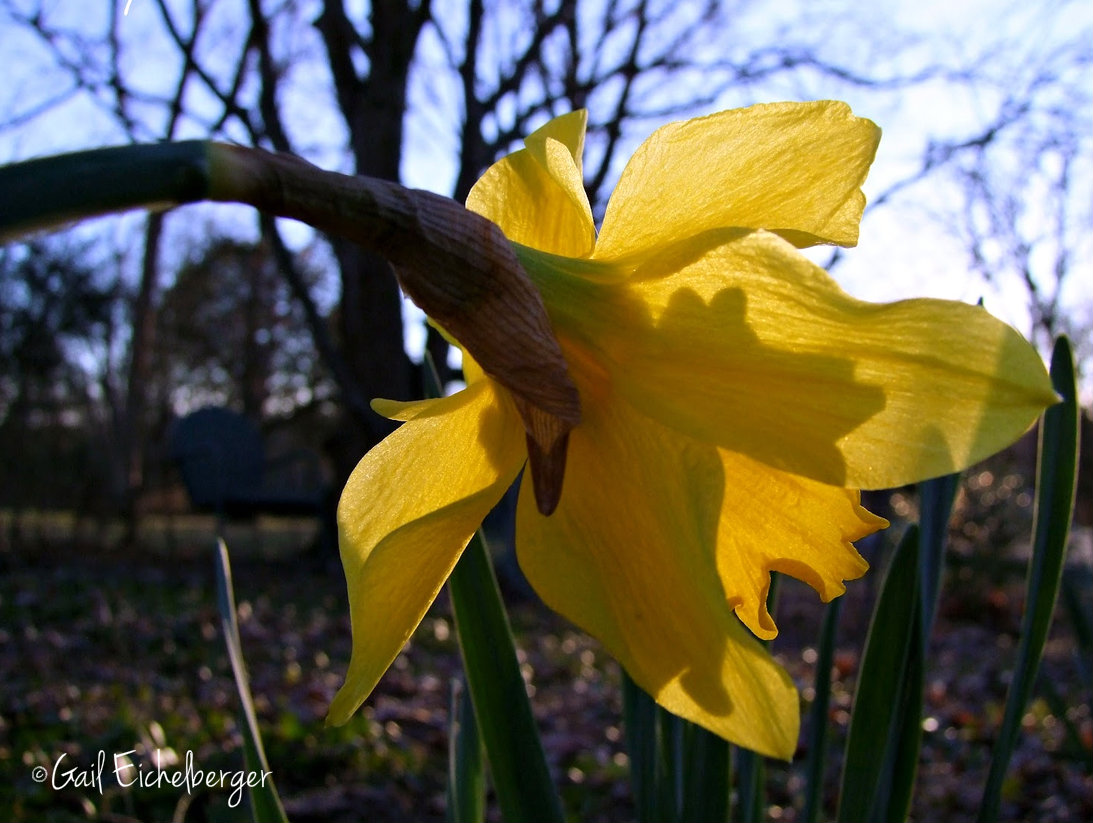 clay and limestone: february gardenbloggers' bloom day