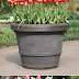 Do this in the fall. Spring bulbs in Pots