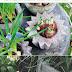 Book : Concrete Garden Projects