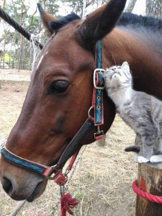 Funny animals of the week - 19 October 2018, adorable animal pics, best funny animal