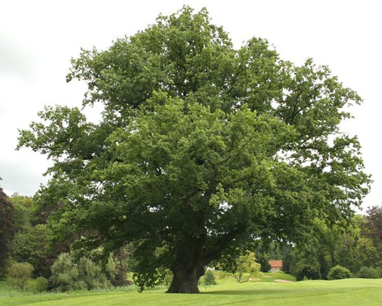 мебель из натурального дерева, древесина для мебели ...