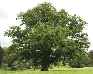 мебель из натурального дерева, древесина для мебели, массив дерева, массив бука, мебель из бука, мебель из сосны, мягкая мебель