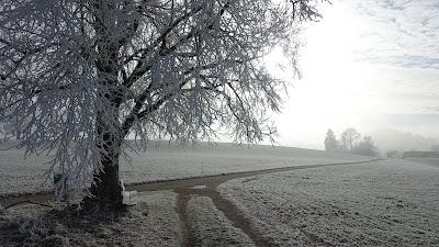 Baum mit Reif