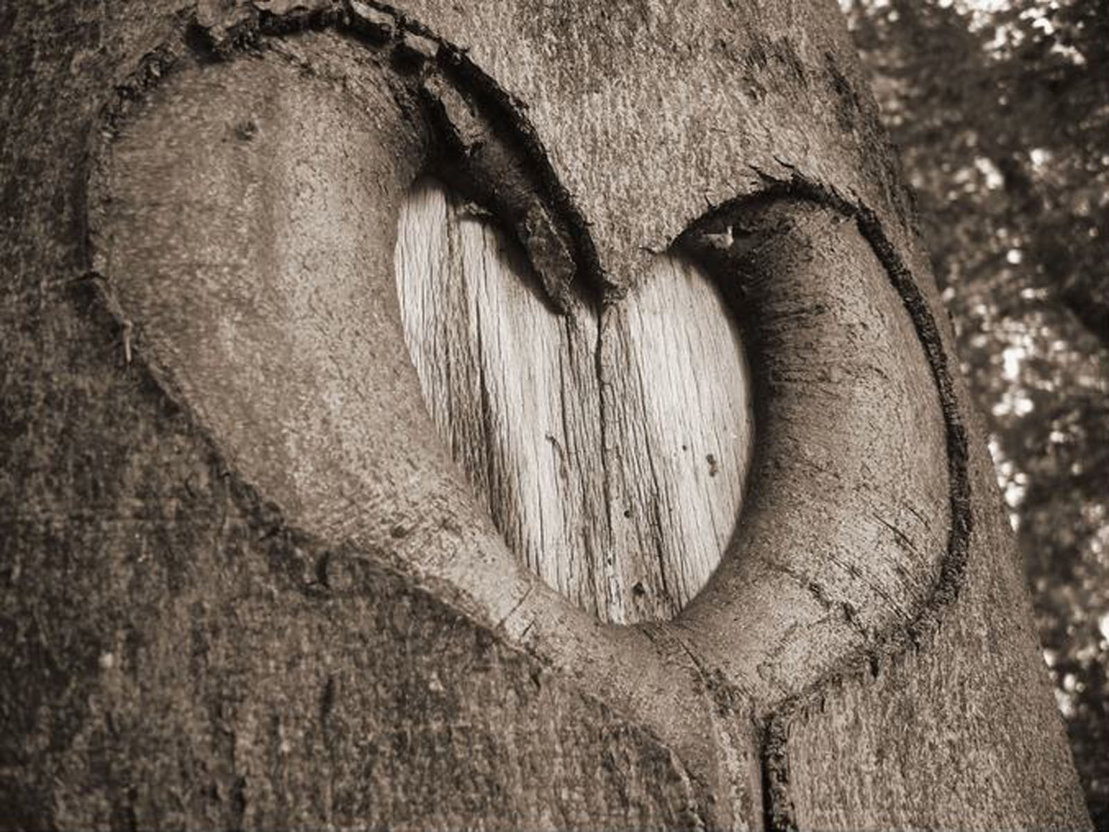 Wallpapers: Love Nature Wallpapers