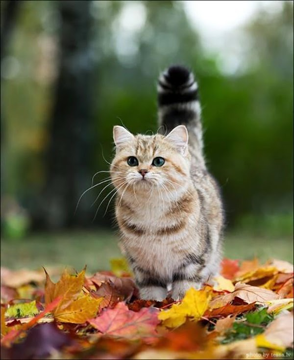 A Gorgeous Cat In The leaves - Hello October! Come on over and discover 25 things to do this October!! Make Crockpot Cider. This image is a fabulous example of all that is lovely about Fall/Autumn. I love that I live in a world where there are seasons! The red apples and cinnamon sticks are perfect scents for the season.