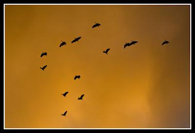 Resultado de imagem para amanhecer Pântano do Sul