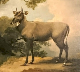 The Nilgai by George Stubbs (1769)  Hunterian Museum and Art Gallery, University of Glasgow