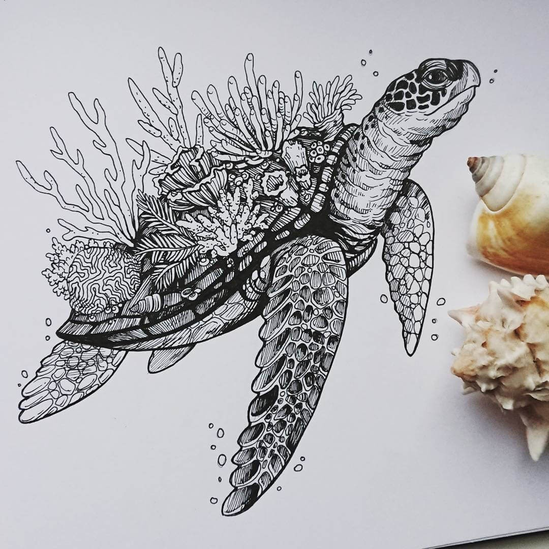07-Sea-Turtle-and-coral-Weronika-Kolinska-Black-and-White-Animal-Ink-Drawings-www-designstack-co