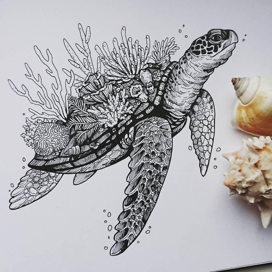 07-Sea-Turtle-and-coral-Weronika-Kolinska-Black-and-White-Animal-Ink-Drawings-www-designstack-co