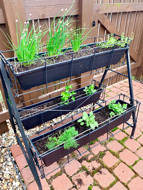 A picture of an herb garden in a free standing garden with three shelves
