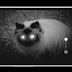 Eerste smartphone met nachtkijker