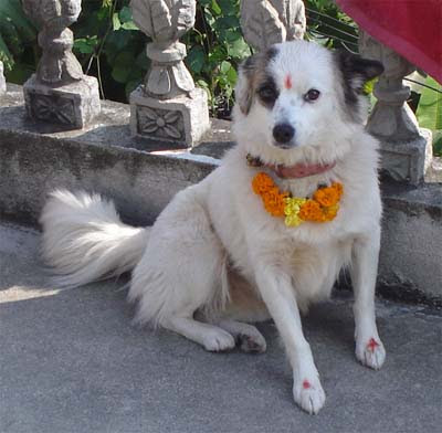 Hindu festival honoring dogs
