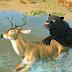 Ultimate Black Panther Animal Safari Survival Game Game Crack, Tips, Tricks & Cheat Code