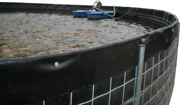 Asesor a trucha y tilapia especificaciones for Construccion de estanques circulares para tilapia