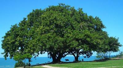 Sobre árvores e homens