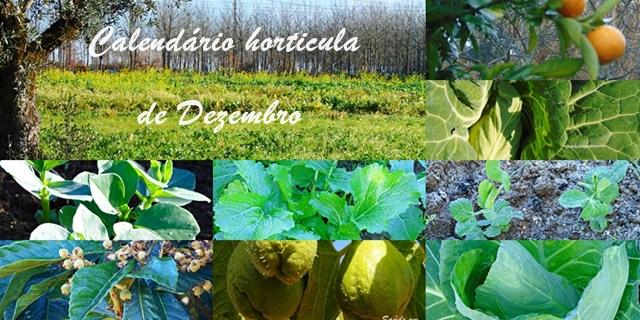 Calendário das sementeiras de Dezembro