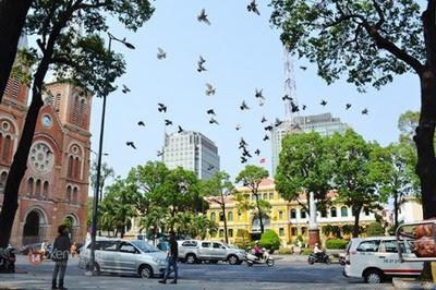 Sài Gòn yêu dấu trong tim- Nhật Quang
