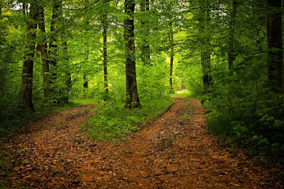 https://pixabay.com/en/path-forest-nature-season-green-1345721/