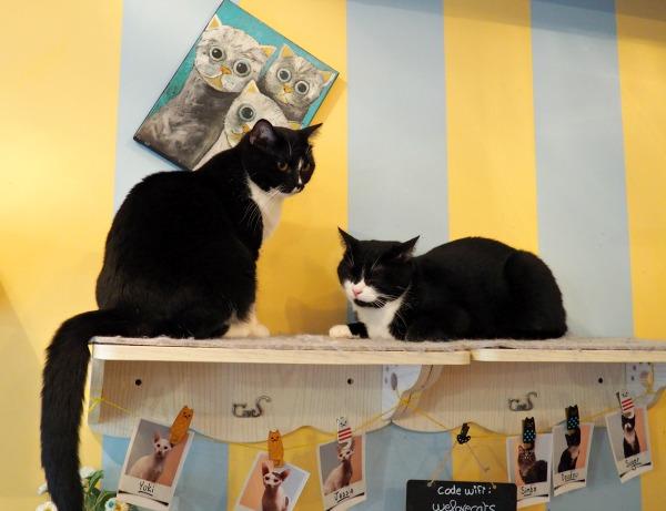 paris café with cats